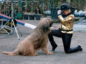 hsdw - dog dance