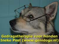 genidogs
